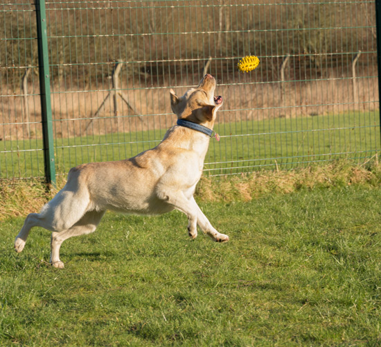 Dog Boarding Kennels In Glasgow Area